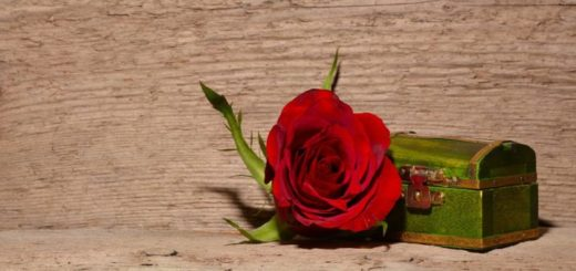 rose-557695_1280
